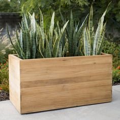 Featuring an extra-large design, the MoDRN Teak Wood Rectangular Planter provides plenty of space to exercise your green thumb. Planter Box Plans, Wood Planter Box, Wooden Planters, Outdoor Planters, Diy Planters, Planter Box Designs, Rectangular Planter Box, Square Planters, Backyard Garden Design