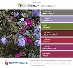 I found these colors with ColorSnap® Visualizer for iPhone by Sherwin-Williams: Gauntlet Gray (SW Brave Purple (SW Paradise (SW Sun Dried Tomato (SW Radish (SW Forward Fuchsia (SW Cerise (SW Gauntlet Gray, Paint Swatches, Sun Dried, Color Pallets, Color Inspiration, Paint Colors, Paradise, Iphone, Purple