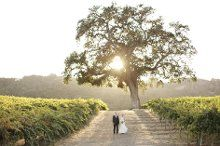 HammerSky Vineyards, Wedding Ceremony & Reception Venue, California - Santa Barbara, Ventura, San Luis Obispo, and surrounding areas