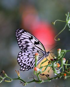 at Butterflyworld / Edinburgh | Flickr - Photo Sharing!
