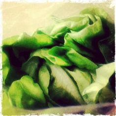 #PanamaFoodies • Lechuga de mantequilla ~ Butter lettuce • www.panamafoodies.com   #FOODIES #PANAMA #YUM #FoodPorn #InstaFood #Love #FoodieLove #InstaFoodie #Flavors #InstaYum #Taste #InstaFlavor #Food #Foodgram #foodiegram #instaphoto #instafoto #instayum #nom #lettuce #lechuga #mantequilla #butter