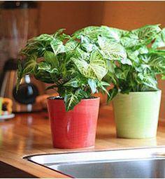 Φυτα εσωτερικου χωρου που καθαριζουν την ατμοσφαιρα