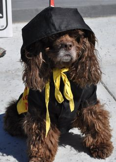 Dog in Costume at Barkus Parade