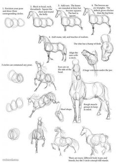 Best Photos of Horse Drawing Tutorial - How to Draw Horse Anatomy, Drawing Horses Step by Step and Basic Horse Head Drawing Drawing Techniques, Drawing Tips, Drawing Reference, Drawing Sketches, Painting & Drawing, Sketching, Horse Drawing Tutorial, Drawing Lessons, Figure Drawing