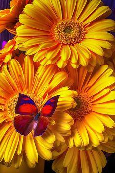 Beautiful Flowers Garden, Beautiful Flower Arrangements, Exotic Flowers, Beautiful Butterflies, Amazing Flowers, Beautiful Nature Pictures, Beautiful Nature Wallpaper, Beautiful Landscapes, Flowery Wallpaper