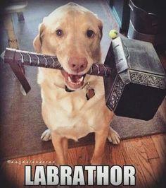 Labrathor :D