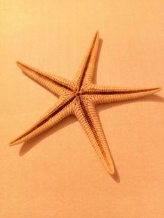 Estrella de mar de Pals. 2003. Actualment es troba a Girona. Foto: Núria