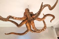 Octopus on display at A Cevicheria in Lisbon