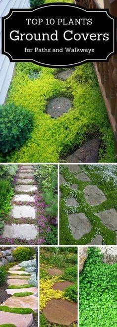 Top 10 plants - ground covers - for paths and walkways. Almost all also grow in zone 4!
