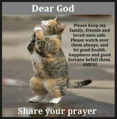 Amen kitty