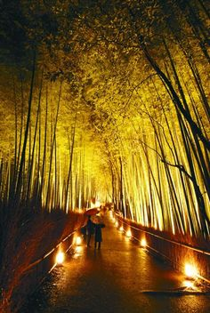 arashiyama,kyoto,japan Bamboo Landscape, Outdoor Lighting Landscape, Bamboo Garden, Garden Landscape Design, Garden Landscaping, Japan Tourism, Japan Travel, Garden Design Magazine, Outdoor Curtains