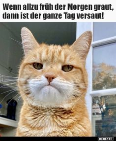 Yet another nickname Funny Cat Memes, Funny Relatable Memes, Funny Cats, Hilarious, Cute Funny Animals, Funny Animal Pictures, Cute Cats, I Love Cats, Crazy Cats