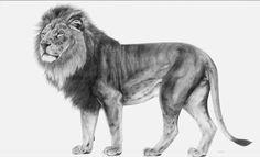 Lion _ François Gruson