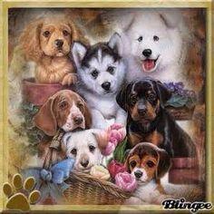 Dogs - so adorable