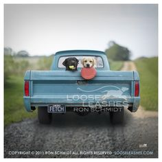 Loose Leashes ~ the best place to find high-quality prints of Ron Schmidt's creative photography featuring all sorts of fun-loving dogs.