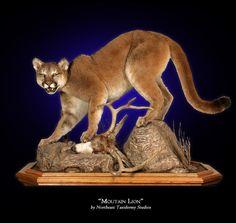 cool mt lion mounts - Google Search