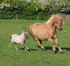 I had a shetland pony named Marone...he taught me how to be tough and patient :)