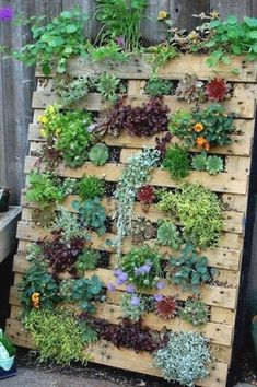 Succulent Pallet Garden& are the BEST DIY Garden & Yard Ideas! Succulent Pallet Garden& are the BEST DIY Garden & Yard Ideas! The post Succulent Pallet Garden& are the BEST DIY Garden & Yard Ideas! Garden Yard Ideas, Garden Beds, Garden Landscaping, Backyard Ideas, Porch Ideas, Garden Ideas With Pallets, Cute Garden Ideas, Succulent Landscaping, Garden Ideas For Small Spaces