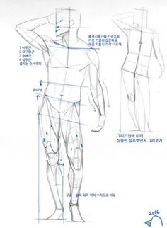 Drawing The Human Figure - Tips For Beginners - Drawing On Demand Human Anatomy Drawing, Human Figure Drawing, Figure Sketching, Figure Drawing Reference, Gesture Drawing, Body Drawing, Anatomy Reference, Drawing Poses, Life Drawing
