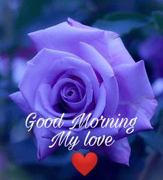 Morning Love Text, Good Morning Wishes Love, Flirty Good Morning Quotes, Good Night Beautiful, Good Morning Beautiful Quotes, Good Morning Good Night, Morning Msg, Good Morning Sweetheart Images, Love Hd Images