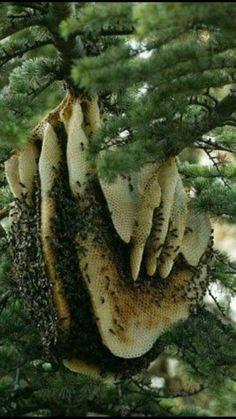 Лесной дикий мед