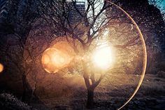 Image shared by fearless. Find images and videos about beautiful, photography and life on We Heart It - the app to get lost in what you love. Lens Flare, Through The Looking Glass, Nymph, The Great Outdoors, Art Photography, Scenery, Fine Art, Pictures, Inspiration