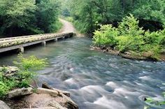 1000 images about uwharrie national forest on pinterest for Croatan national forest cabins