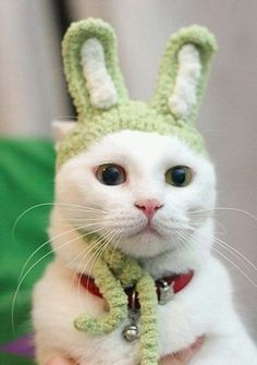 토끼로 변신한 귀여운 고양이 : 네이트판