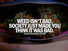 Cannabis Seeds available now from Seedsman. Buy medical, feminized and auto-flowering seeds with fast worldwide shipping and free seeds. Stoner Quotes, Weed Quotes, Weed Memes, Weed Humor, Ganja, Bob Marley, Endocannabinoid System, Puff And Pass, Up In Smoke