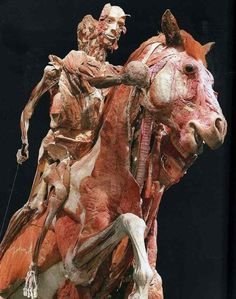 """German anatomist Dr. Gunther von Hagens has a penchant and pride for turning real human bodies into statues with a technique called """"plastination."""" By using a volunteer's dead body and injecting a liquid plastic solution into it to harden and preserve the cadavers entirely, von Hagens creates """"timeless"""" art. However, the controversial nature of his work means that much like a mad scientist, he must work out of a secret lab. Von Hagens' first displayed his sculptures at a 1995 exhibition in Japan"""