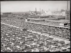 Acres of livestock pens with animals waiting to be slaughtered after being transported from western and southern states. Union Stock Yards, Chicago, Illinois, ca. 1947.