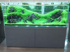 Aquarium Design Gallery photo