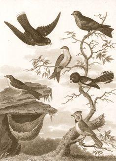 Milton's Birds