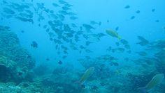 amami diving  http://www.marineblue-kakeroma.com/diving/photo/47