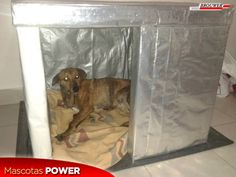 cuchas-recicladas-de-cartones-de-leche-mar-del-plata-buenos-aires-uma-perro-gato-mascotas-power_pipetas_brouwer_01-e1437740603141.png (400×300)