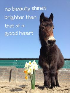 What a darling little mini mule! Reminds me of our sweet mini hinny Nellie. Amazing Animal Pictures, Word Pictures, Cute Pictures, Donkey Pics, Cute Donkey, Miniature Donkey, Miniature Horses, Sweet Soul, Tim Mcgraw