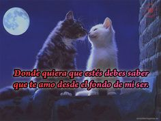 lindos-gatos-dandose-un-beso-imagenes-de-amor-para-celular.jpg (640×480)
