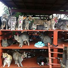 500 Cats Are Waiting To Be Cuddled At This Cat Sanctuary In Hawaii | Bored Panda