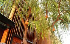 We are a global and creative design studio in Geneva, Tokyo and Beijing. Restaurant Facade, Restaurant Design, Wall Exterior, Exterior Design, Asian Garden, Slat Wall, Wooden Slats, Bird Tree, Garden Trees