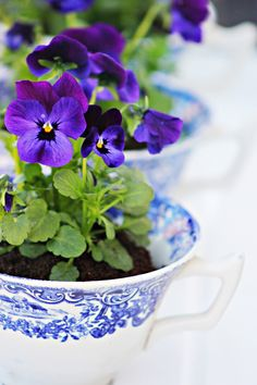 Flowers in a tea cup!  What an awesome idea!        Aline ♥