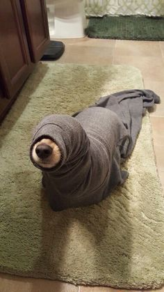 Lovely dog in a blanket