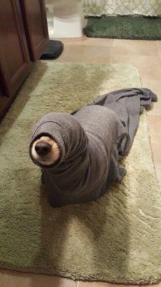 Lovely dog in a blanket
