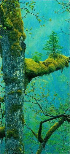 Дерево, растущее на другом дереве.
