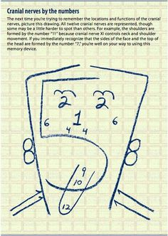 Cranial Nerves by numbers! I thought this was very clever and could be helpful for visual learners.
