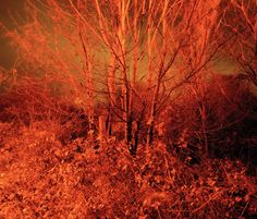 Forest (fire) by Paul Seawright