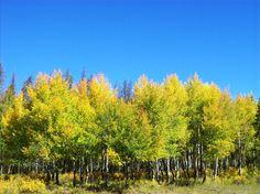 Crisp blue skies and golden Aspen leaves in Grand Lake . . . www.stayingrandlake.com #GrandLake #Colorado