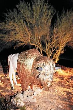 Tucson Oddity: Buffalo roams in home's yard. How did he get there? The answer is here: http://azstarnet.com/news/local/tucson-oddity-buffalo-roams-in-home-s-yard-for-now/article_8df71ea7-72cd-5cfd-bf42-38432564206c.html