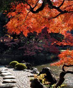 Botanical Gardens | Koishikawa Korakuen Gardens, Tokyo, Japan