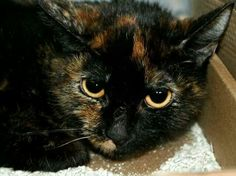 Please save this kitty.she is going to die because owner is in hospital.she has until 7 pm.please share or adopt and foster.visit pets on deathrow on facebook Tampa.