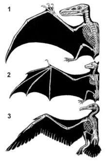 Fliegen (Fortbewegung) – Wikipedia